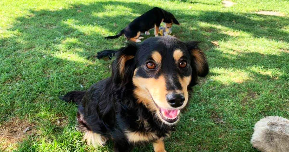 Barton Peveril student helps Dog Shelter